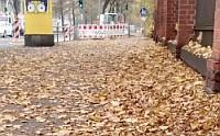 Laub auf Bürgersteig